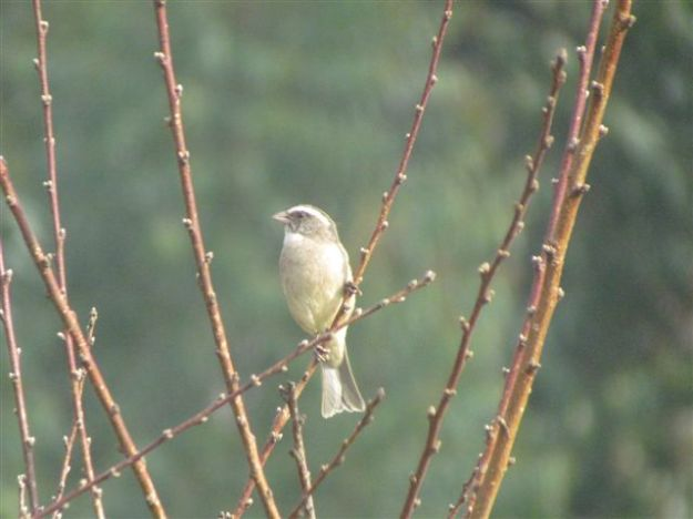 bird on bare branches