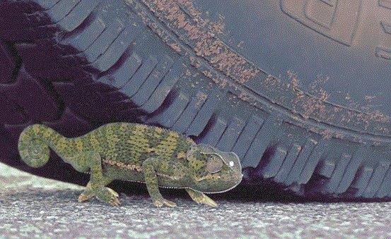 Chameleon Crossing