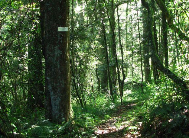 r milestone forest