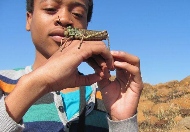 r mpop walk winter asanda grasshopper