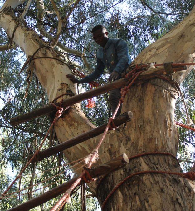 r tree