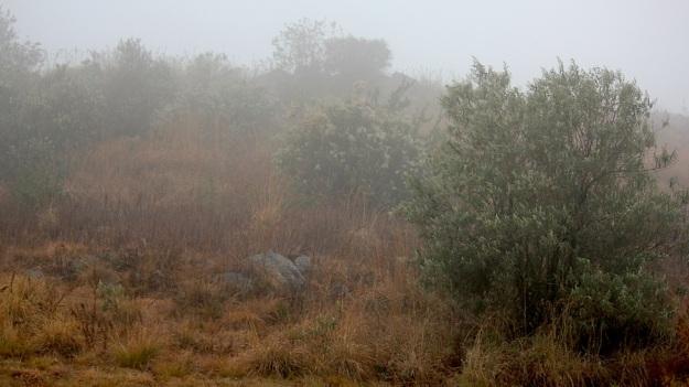2014 07 06 Mist