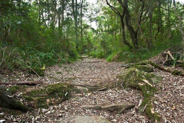 forest walk  by Stephen Pryke r