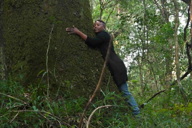 forest walk Penz