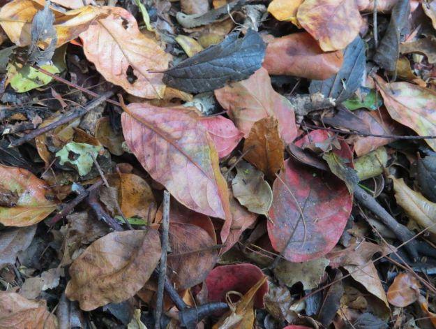 r leaf litter