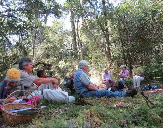 rr picnic in forest