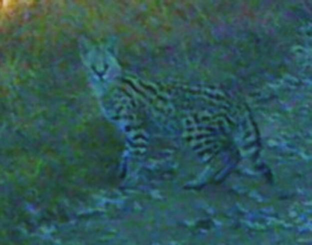 Serval 2 JPEG 1200dpi