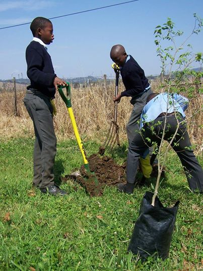Sibongumbovu tree planting for spring
