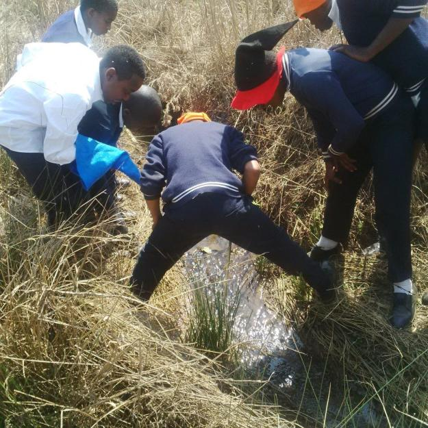 What can we find in a wetland