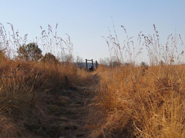 winter grassland trail dargle 088