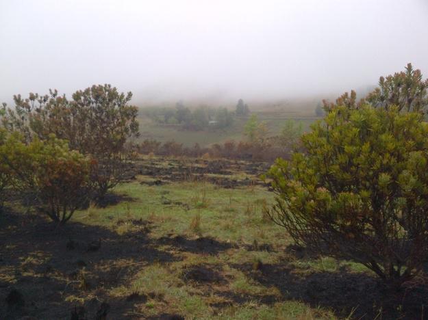 culamanzi greening up