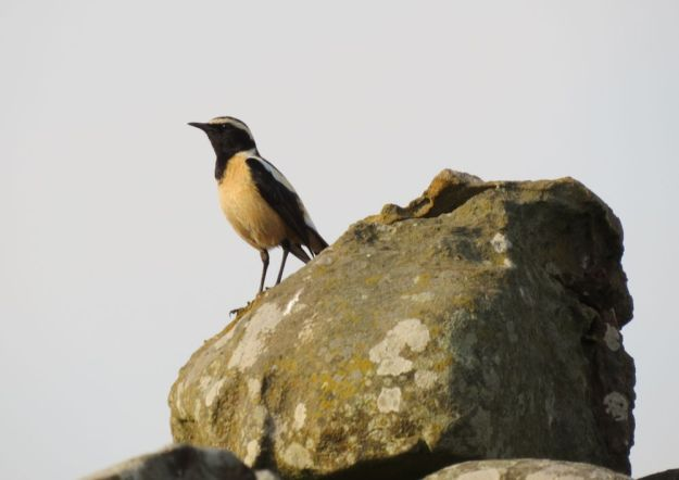 r stone chat
