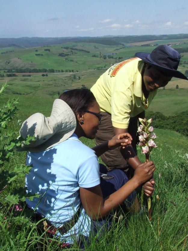 DSCF4040Hlengiwe, Mbali and Disa crassicornis