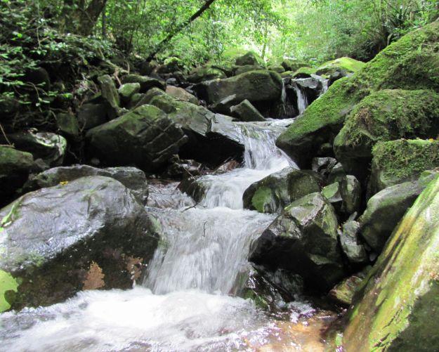 r stream shawswood 008