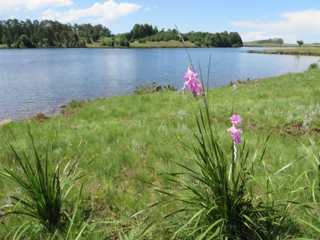Lake Lyndhurst