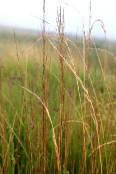 Boston_5308_grass