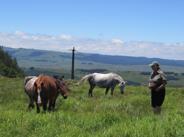 Caroline and horses
