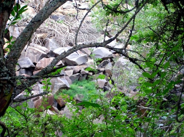 The stream flows immediately below the rocks which form the bank on the R103 where a truck recently broke through the Armco barrier and had to be winched back to the road. The rock hyrax colony lives in these tumbled rocks.