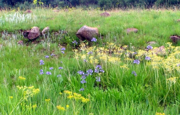 The wetland contains multiple flower species and deserves a formal survey.