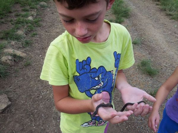 Ethan found a dead Red-lipped Herald snake