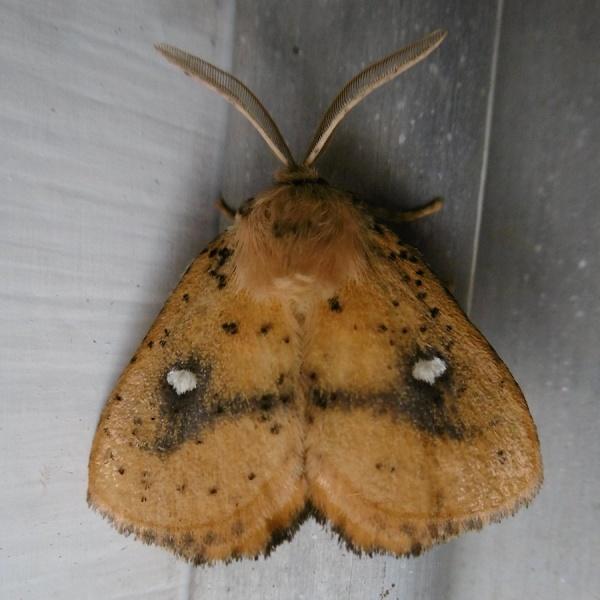 Moth P1020352