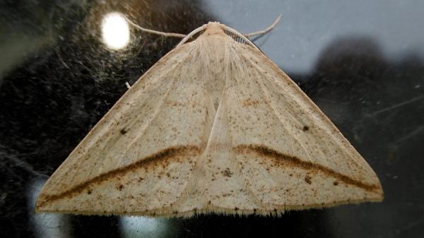 Moth P1020354