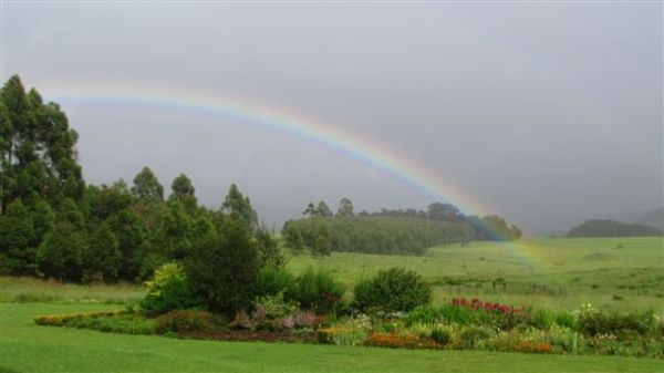 Rainbow over garden one morning after storm.