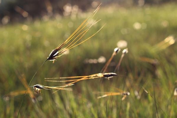 Grass IMG_3044