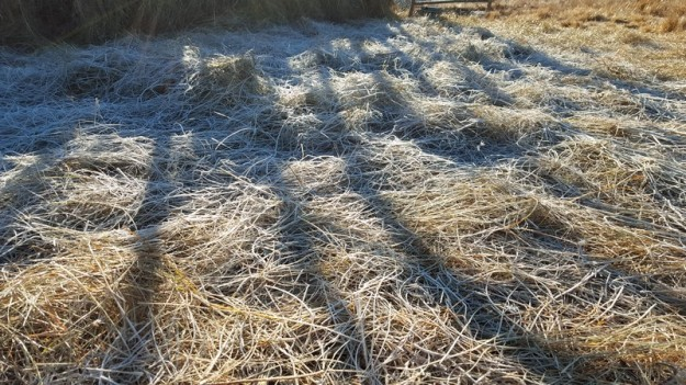 Frost on hay