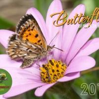 Butterfly Calendar 2017