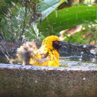 Dargle Wildlife Sightings - August 2015