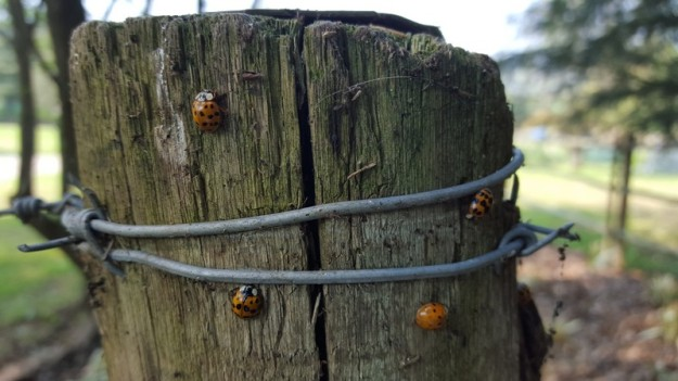 Pole with Orange Ladybirds