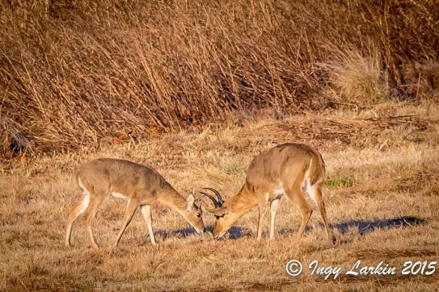 Munching breakfast together. Photographed by Ingy Larkin.