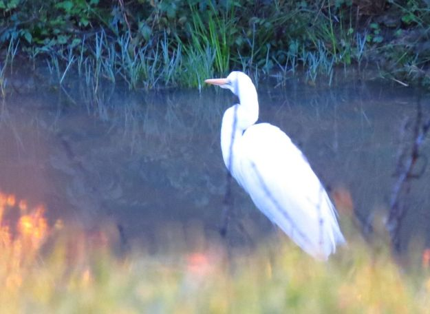 Who's this Egret?