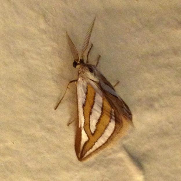 02 Moth IMG_1422