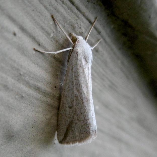 02 Moth P1050939