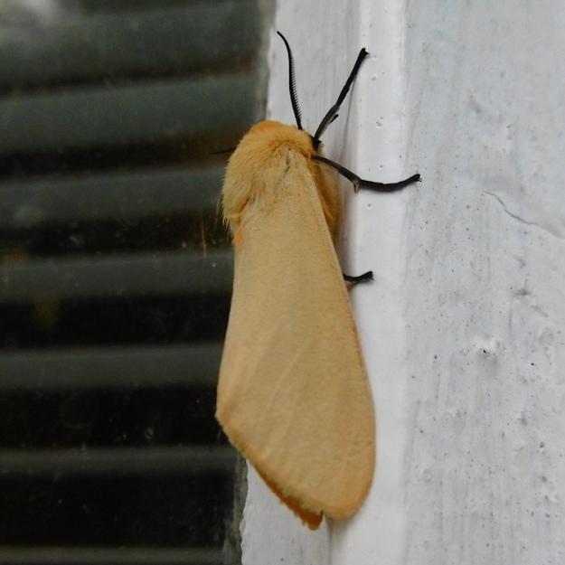 02 Moth P1050942