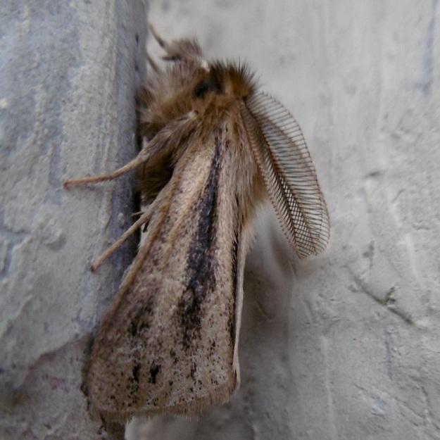 02 Moth P1050946