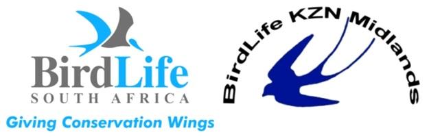 BLSA and Club logos