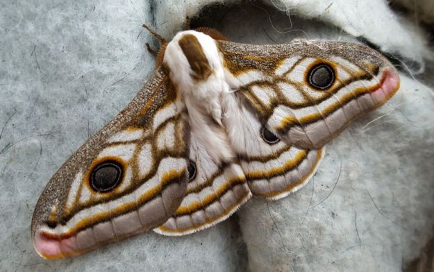 Large moth on dog blanket