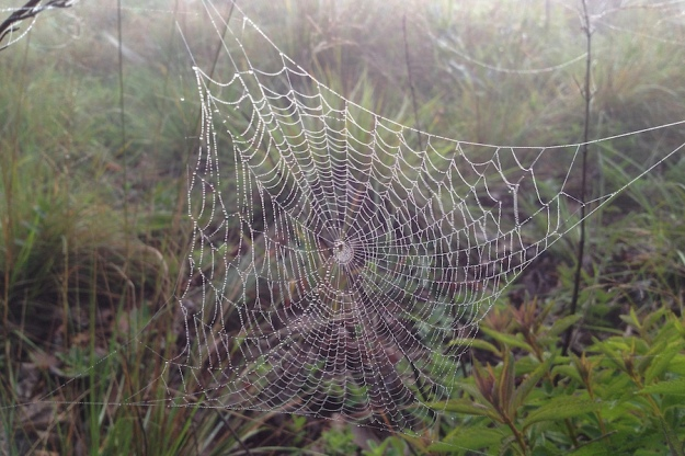 05 Spider web IMG_1594