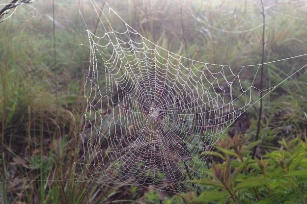 05 Spider web IMG_1594