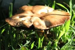 05 Fungi IMG_4725