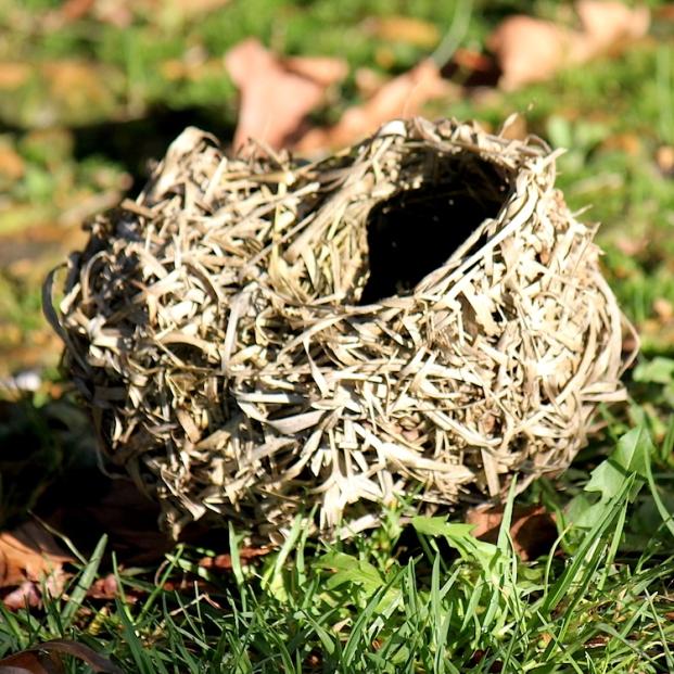 Village Weaver nest