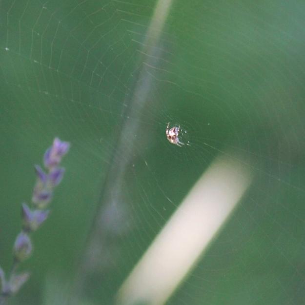 07 Spider IMG_4741