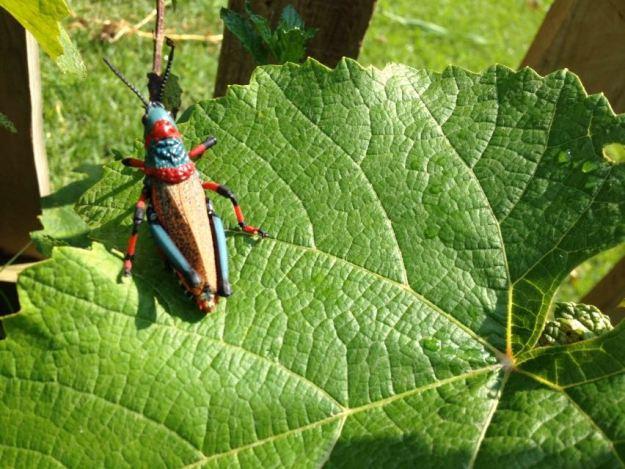 Locusts in the Garden 2