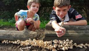 Mushrooms and kids