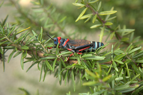 They sure don`t mind what they eat, this one I found on my rosemary bush