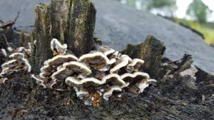 Furry Fungi