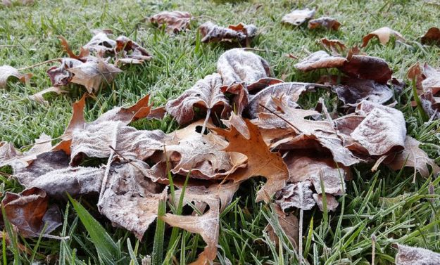 Autumn frost on leaves